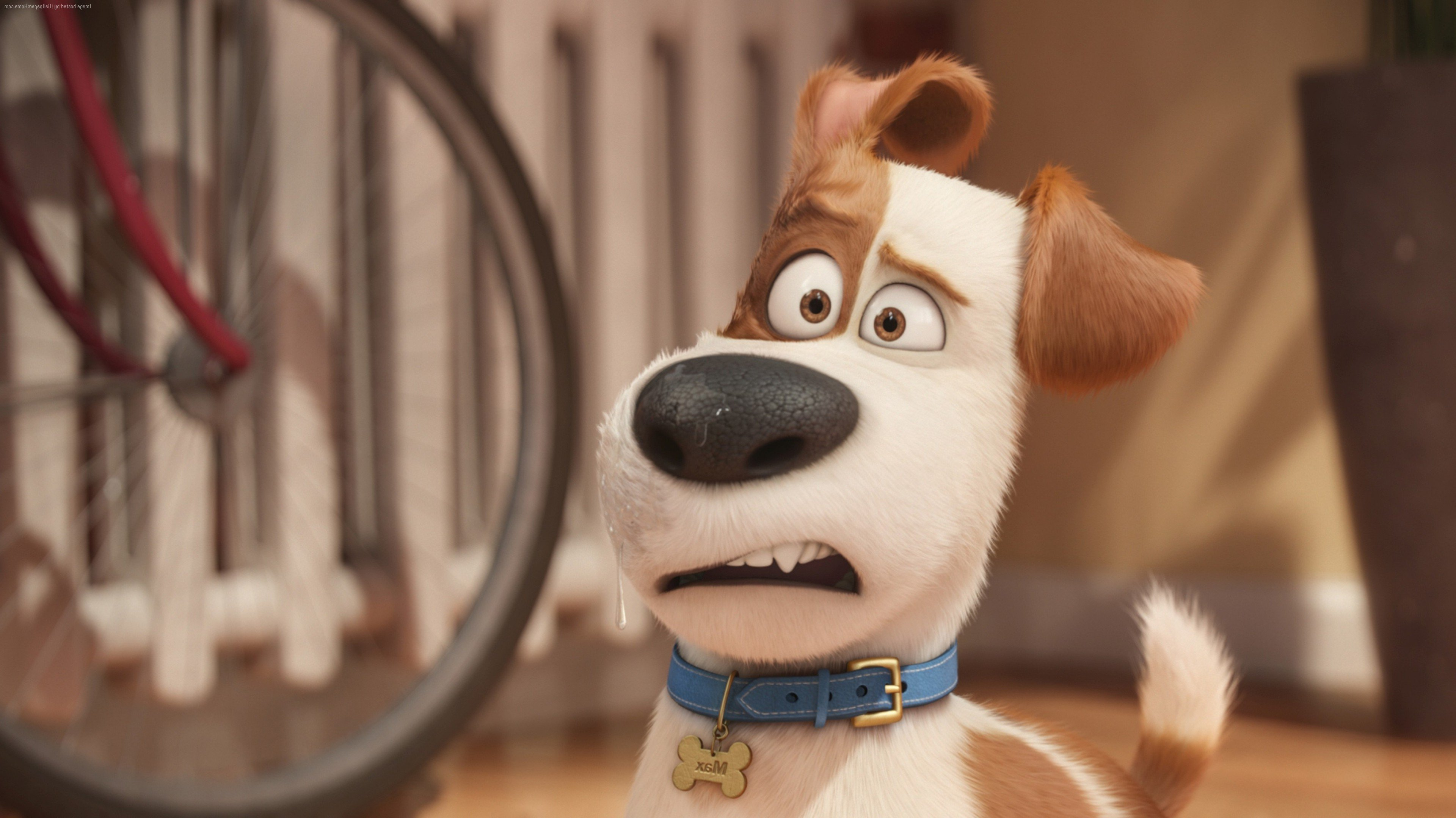 Max The Secret Life Of Pets Hd Movies 4k Wallpapers Images