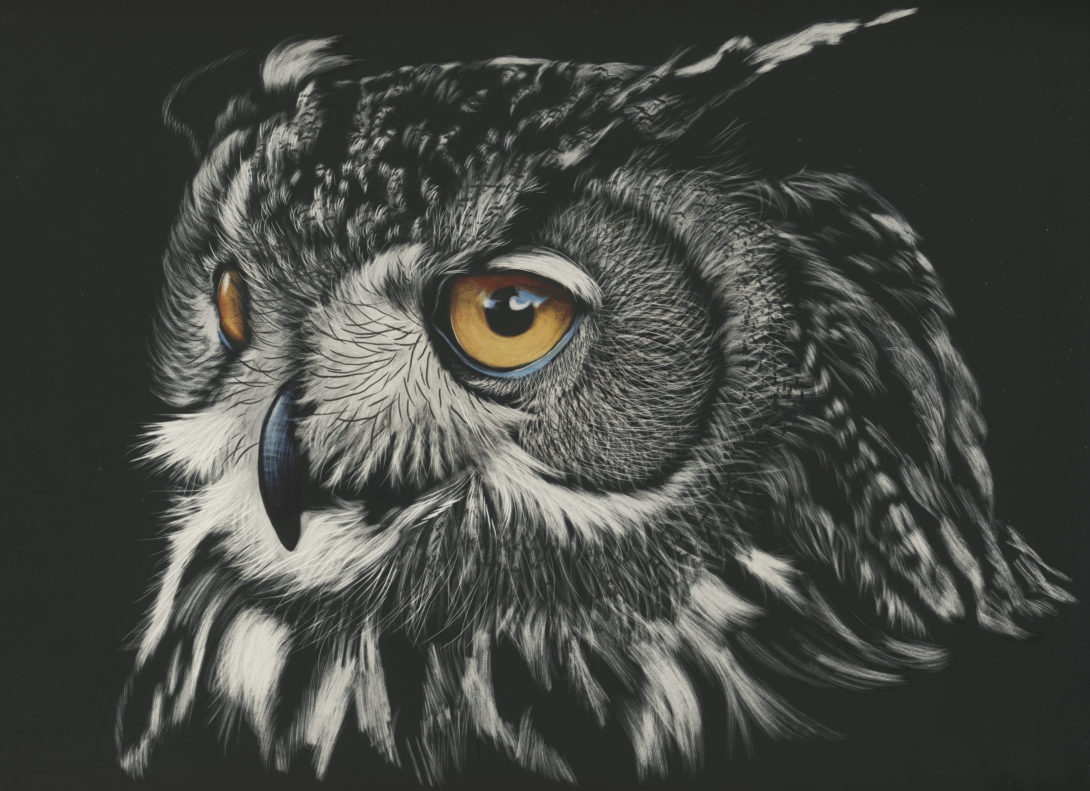 Owl Painting 4k Hd Animals 4k Wallpapers Images Backgrounds Photos And Pictures