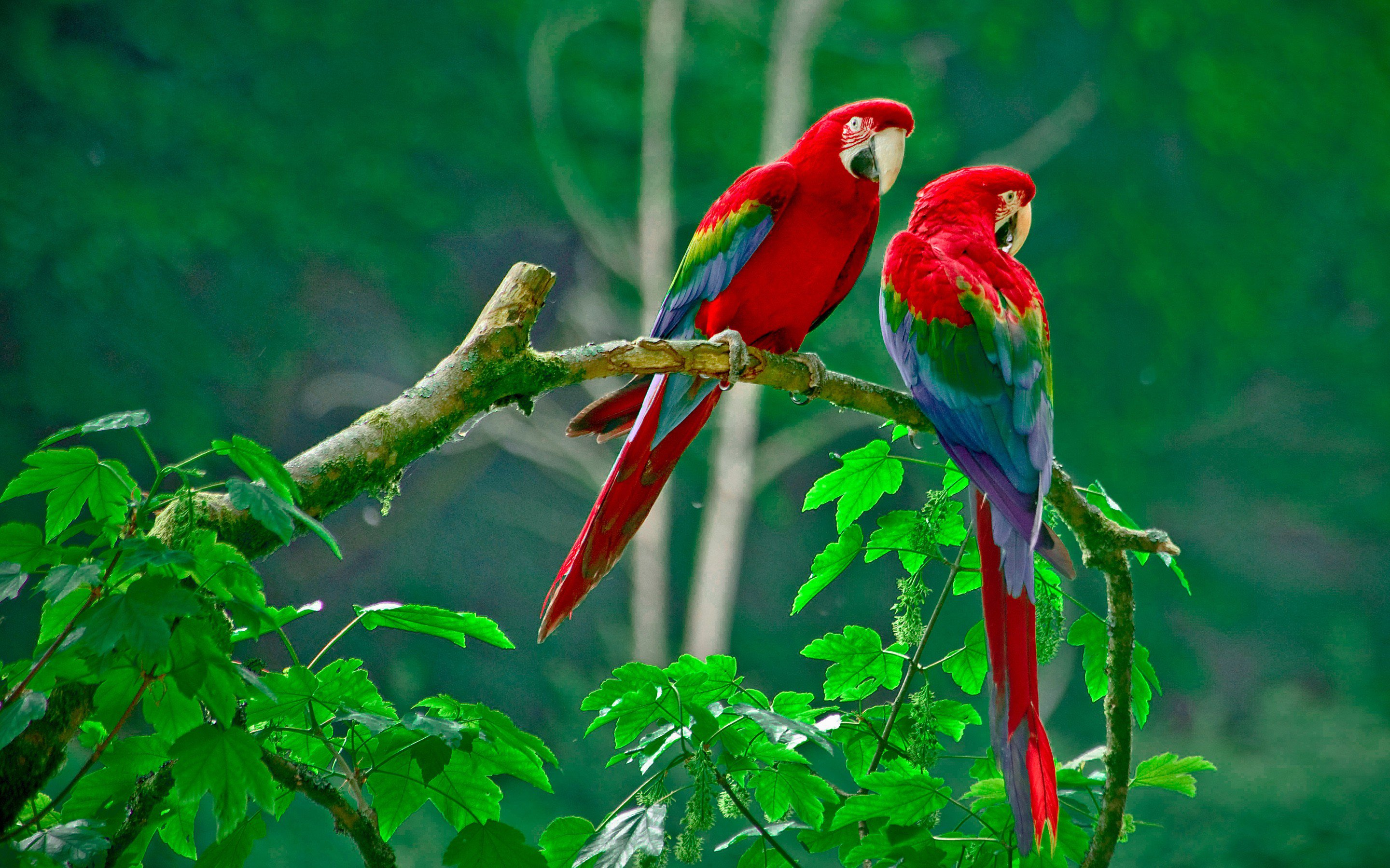 Parrots Paradise Hd Birds 4k Wallpapers Images Backgrounds Photos And Pictures