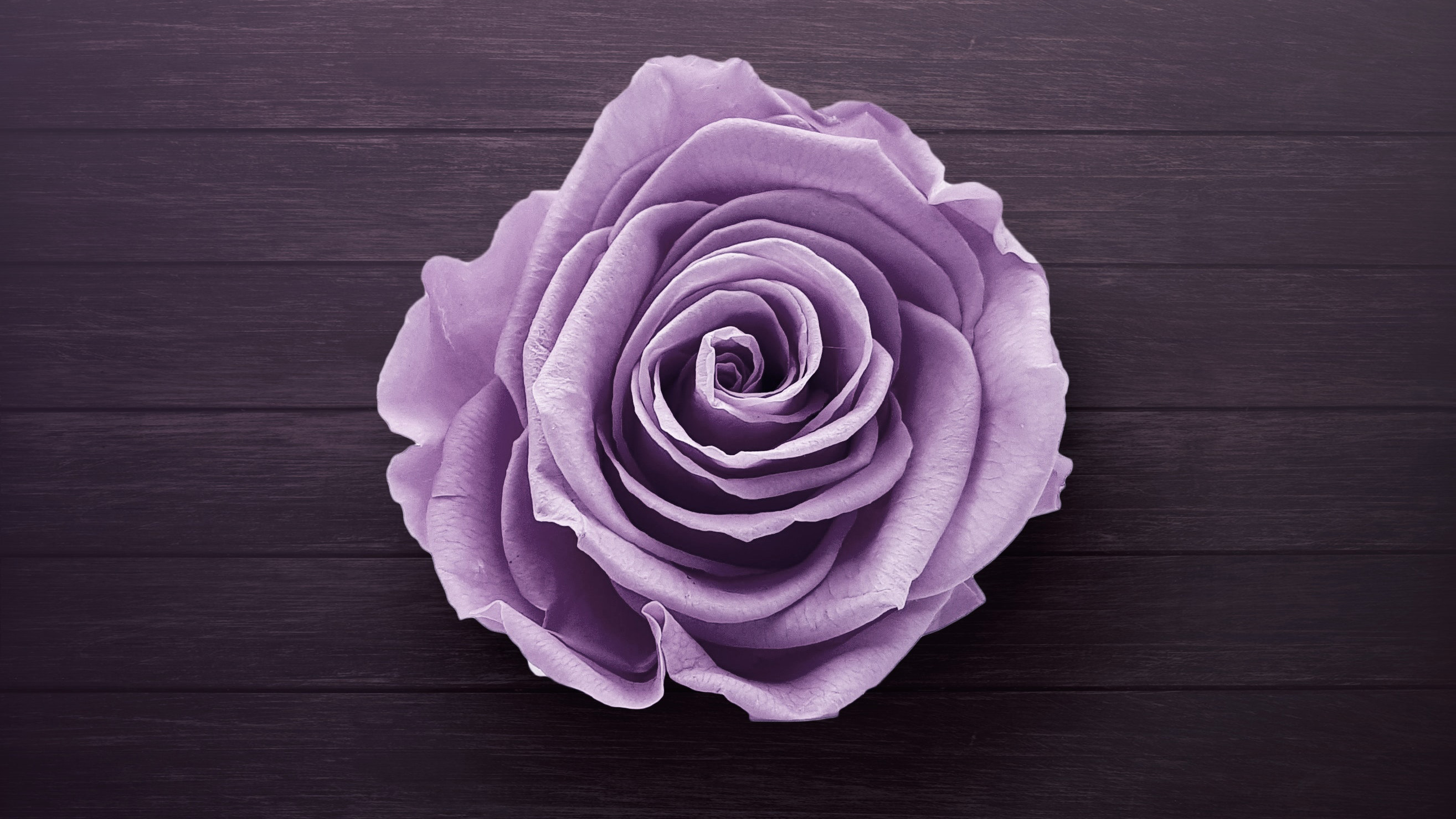 1920x1080 Purple Rose Laptop Full Hd 1080p Hd 4k Wallpapers Images Backgrounds Photos And Pictures