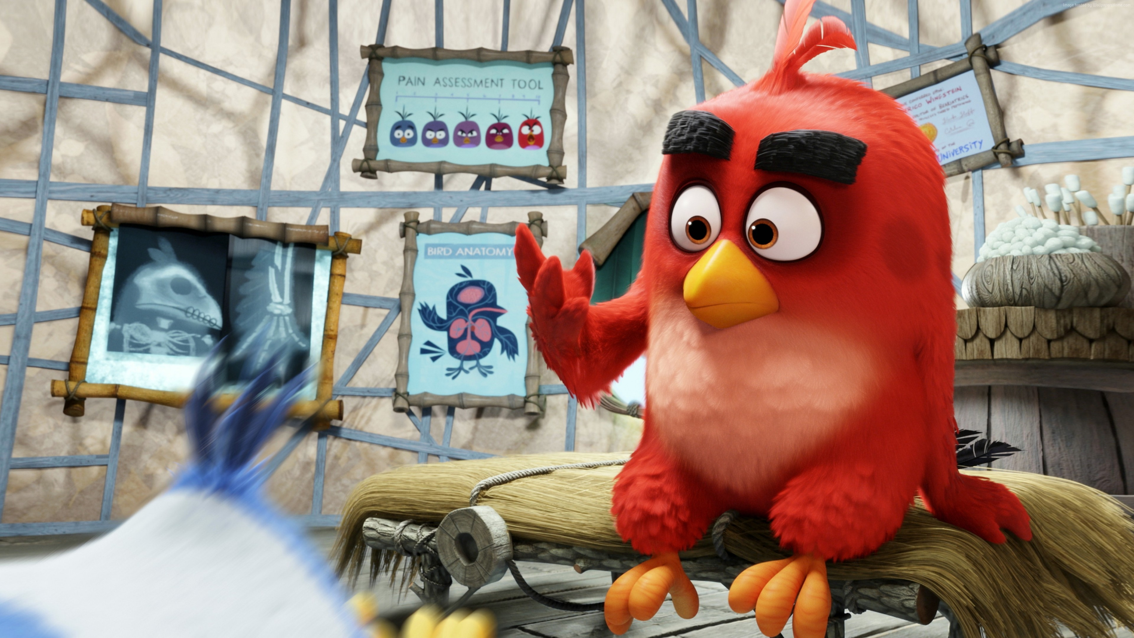 Red The Angry Birds Hd Movies 4k Wallpapers Images Backgrounds