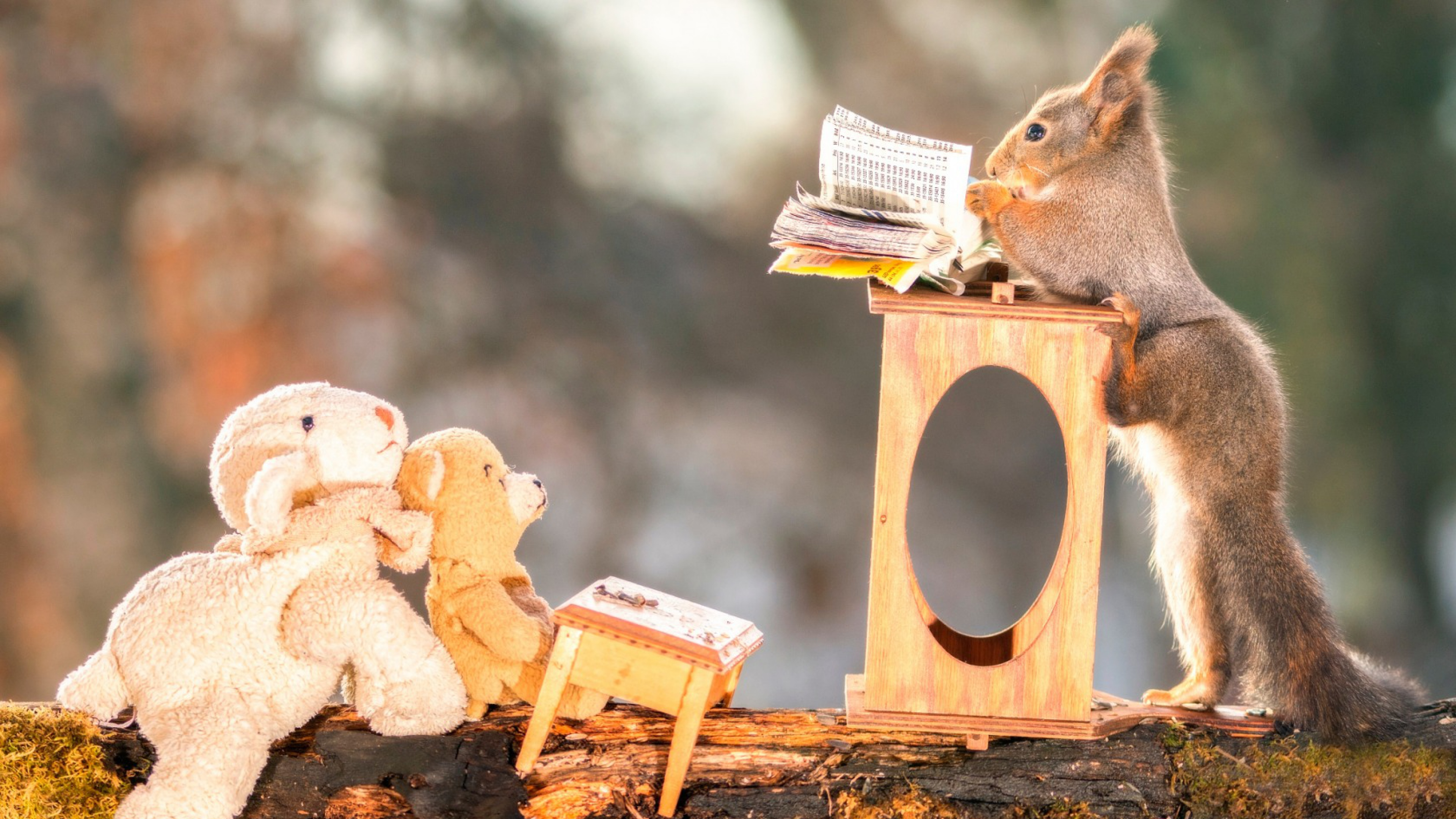 1360x768 Squirrels Funny Laptop Hd Hd 4k Wallpapers Images Backgrounds Photos And Pictures