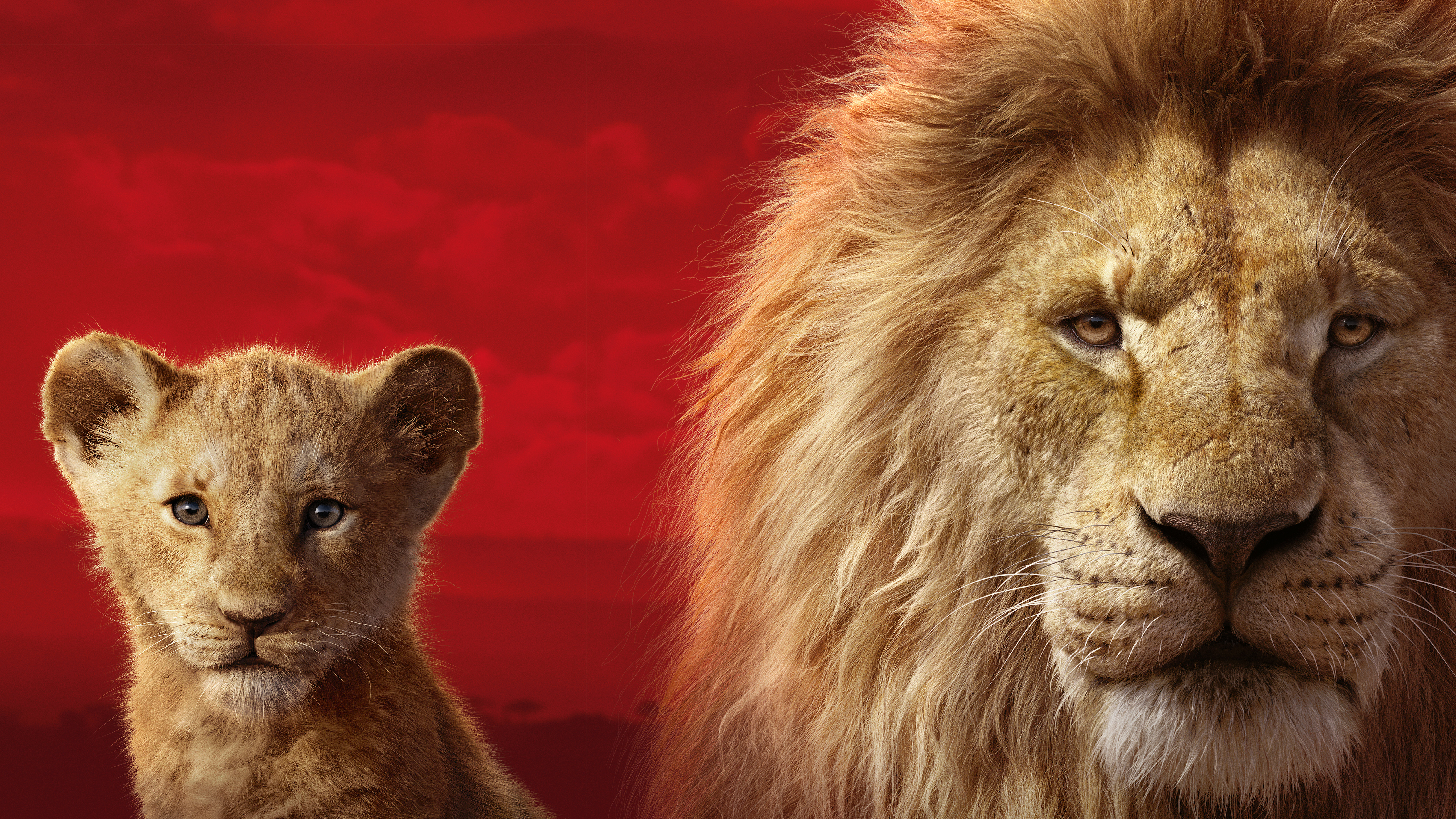 The Lion King 2019 5k Hd Movies 4k Wallpapers Images Backgrounds Photos And Pictures