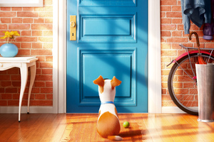 2016 The Secrete Life of Pets Wallpaper