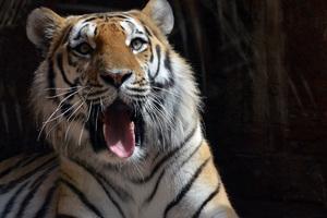5k Tiger