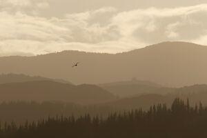 Abel Tasman National Park 4k