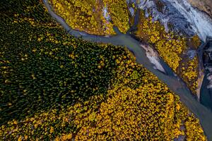 Aerial Photography Beauty In Nature Forest