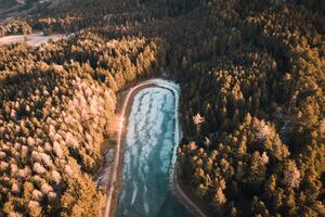 Aerial Photography Trees 4k Wallpaper