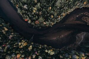 Aerial View Autumn Trees