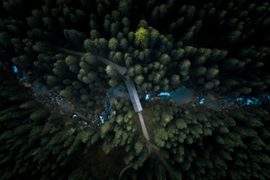 Aerial View Forest 4k