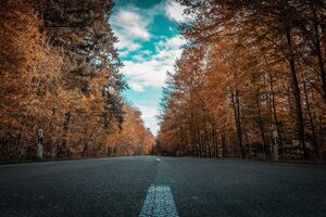 Alone Road Forest Autumn Golden Trees Ultra 4k Wallpaper