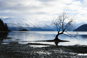 Alone Tree Snow Lake Mountain Landscape 5k Wallpaper
