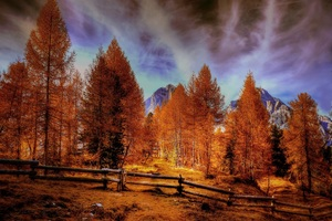 Alpine Mountains Autumn Forest Trees