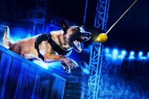 Americas Top Dog Wallpaper