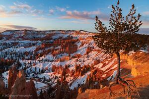 Ancient Bristlecone Pine Over Bryce Canyon 8k Wallpaper