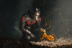 Ant Man Movie Wallpaper