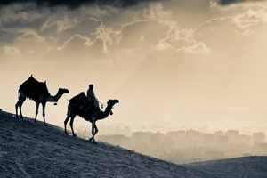 Arab People Camels Wallpaper