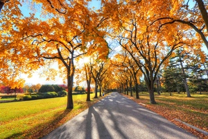 Autumn Alley Park Wallpaper