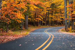 Autumn Drive Road 4k Wallpaper