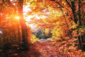 Autumn Forests Leaves Fall 5k Wallpaper
