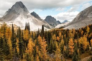 Autumn In The Rockies Wallpaper