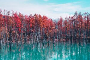 Autumn Lake Reflection Trees Wallpaper