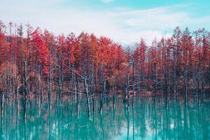 Autumn Lake Reflection Trees