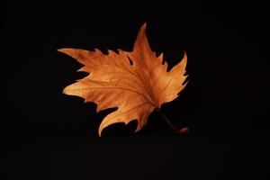 Autumn Leaf Black Background