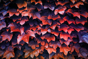 Autumn Leaves 4k