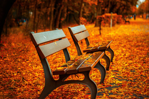 Autumn Leaves Bench Wallpaper
