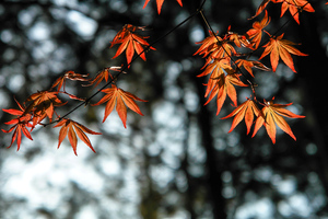 Autumn Leaves Orange 4k Wallpaper