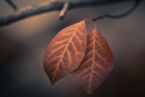 Autumn Macro Leaves