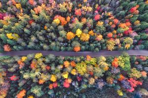Autumn Path Of Forest Drone View
