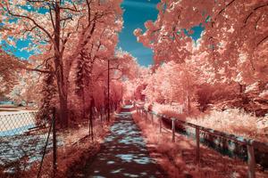 Autumn Photography 4k