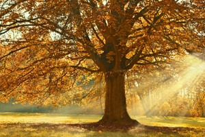 Autumn Rays Of Light Trees 5k Wallpaper