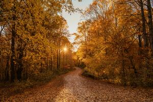 Autumn Road 4k