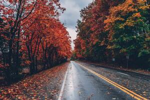 Autumn Road Trees On Sides Fallen Leaves Wallpaper