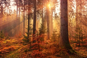 Autumn Sunbeams Forest Light Rays 5k