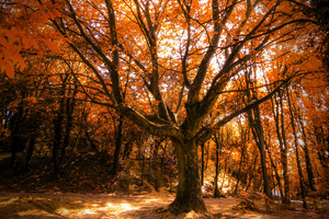 Autumn Tree 4k