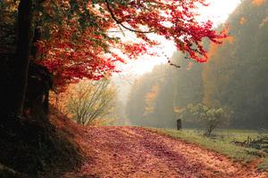 Autumn Tree Fall 4k Wallpaper