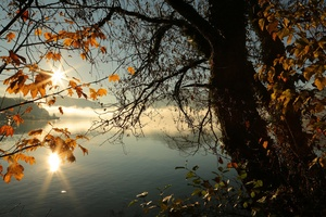 Autumn Tree Lake Sunbeams Morning 4k Wallpaper