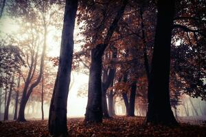 Autumn Trees Park Forest 5k Wallpaper