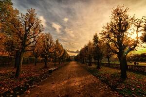 Autumn Trees Path