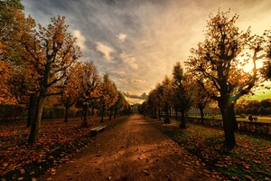 Autumn Trees Path Wallpaper