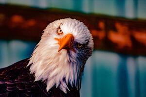 Bald Eagle 5k Wallpaper