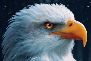 Bald Eagle Closeup 4k Wallpaper