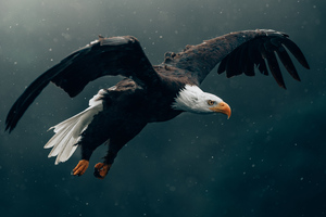 Bald Eagle Flying 4k Wallpaper