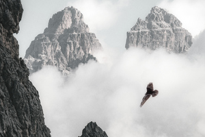 Bald Eagle Flying Through Clouds And Mountains 4k