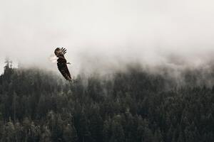 Bald Eagle Sky 5k Wallpaper