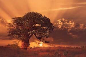 Baobab Tree Sybset